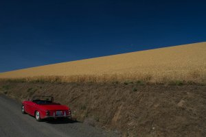 The car, playing in the wheat