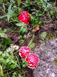 Some Super Mario mushrooms along the trail
