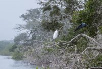 A couple of egrets near the fort