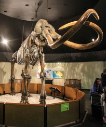 The elusive mastodon